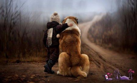 На Алтае собака спасла двухлетнего ребенка